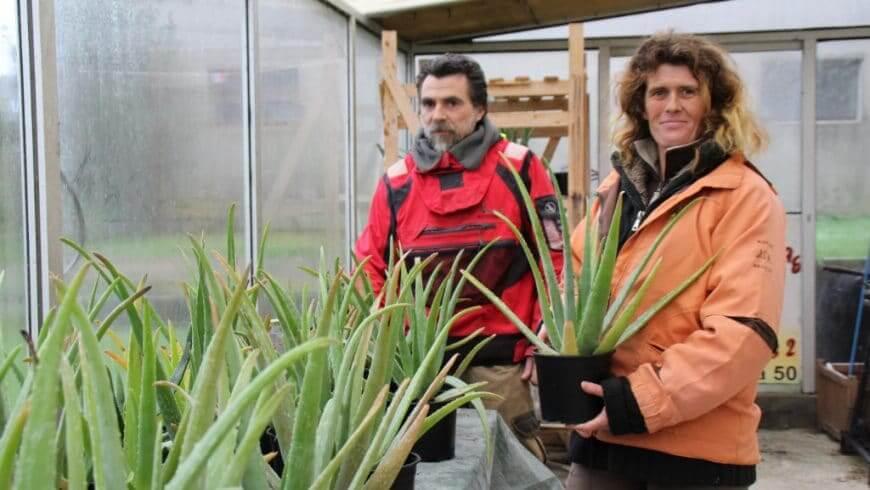 L'Aloe Vera contre le reflux gastro-oesophagien