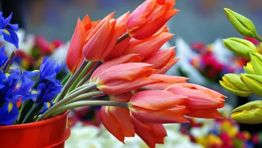 Foire aux fleurs d'été de Quimper